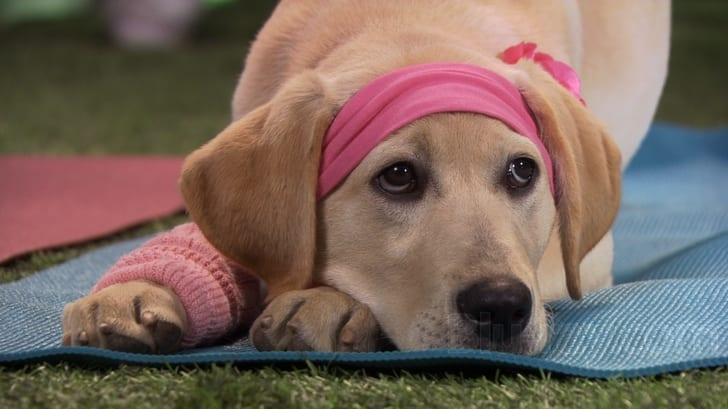 marley and me 2 torrent