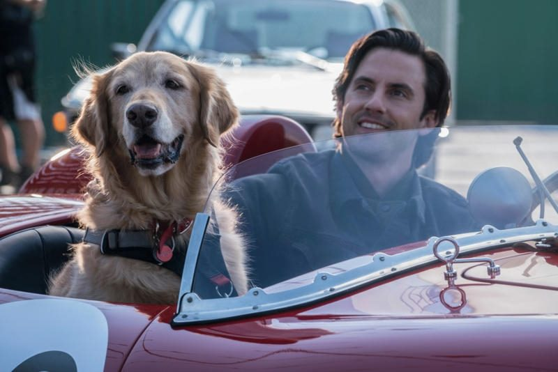 The Art of Racing the Rain - Milo Ventimiglia
